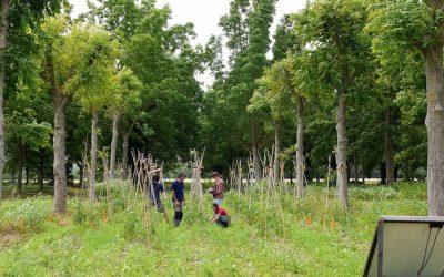 Gard : une Scop soutient des projets agroforestiers dans le sud de la France