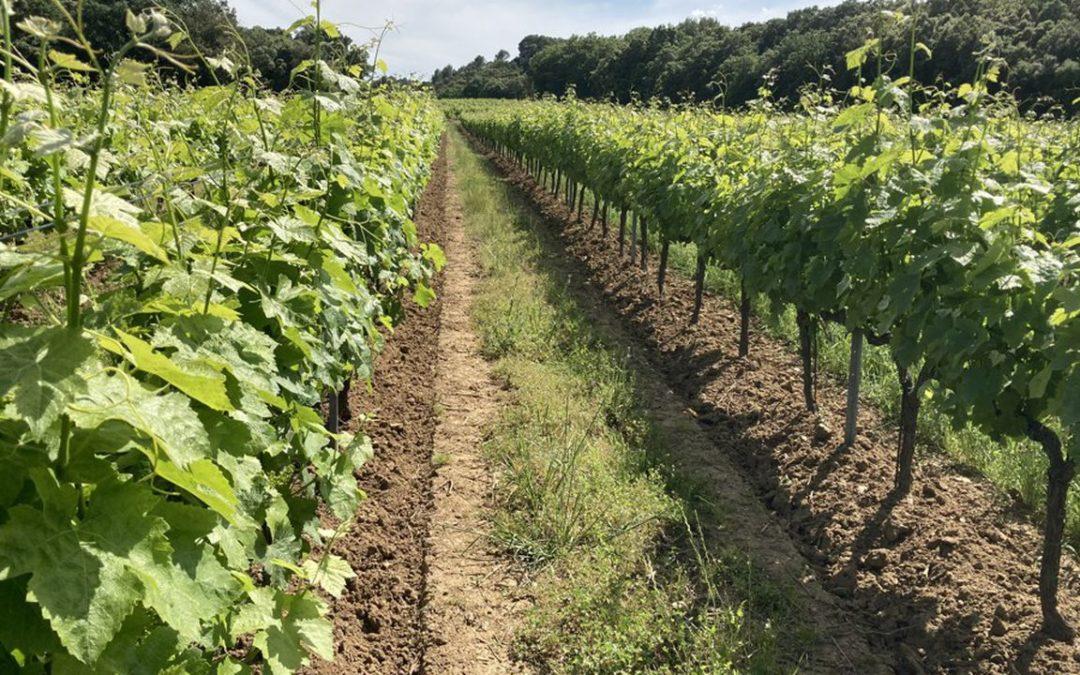 Le groupe Perret expérimente une nouvelle méthode de pilotage du vignoble