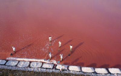 Les salins d'Aigues-Mortes améliorent leur technique de récolte du sel