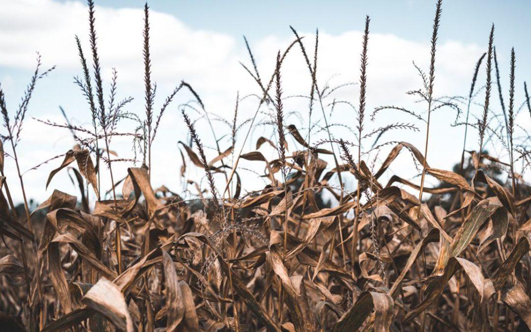 Sécheresse dans le Gard : les agriculteurs adaptent leurs techniques d'irrigation
